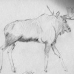 Sketchy Moose Part II