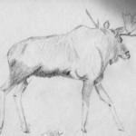 Sketchy Moose Part II