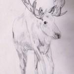 Sketchy Moose Part III