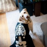 Necessary Halloween Pets Post