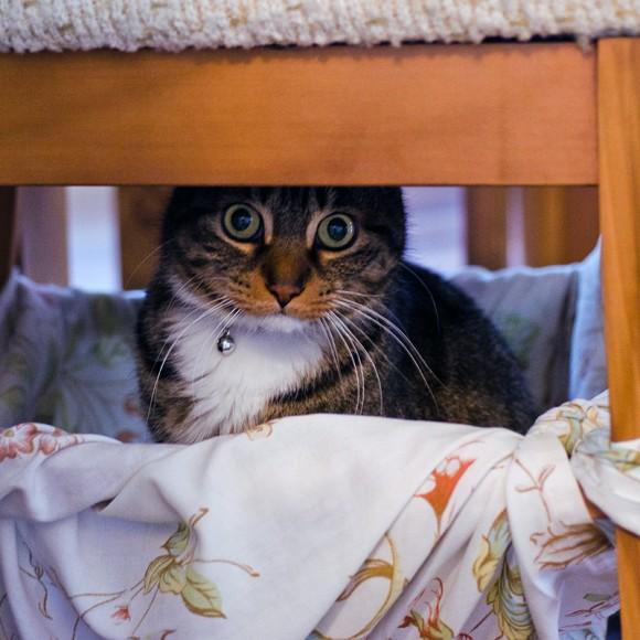 Rico in the DIY cat hammock