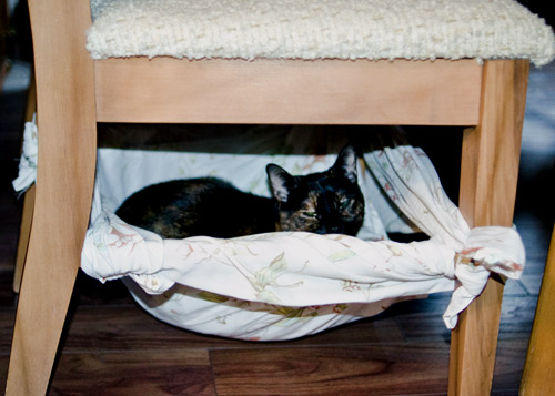 Free Easy Cat Hammock Bed Diy