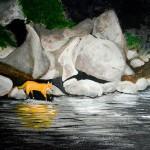 New Art: Foxy Lakey, Northern Ontario Inspired