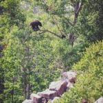 Bears in a Tree