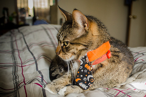 Businessman cat in a tie at Halloween