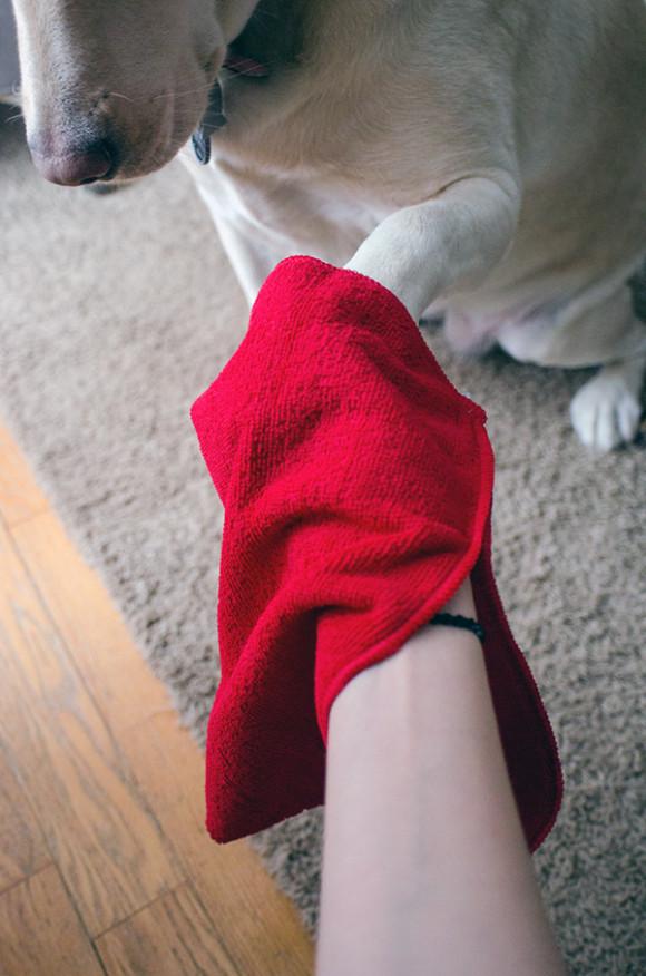 muddy mutt mitt paw