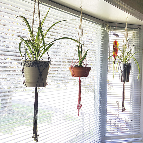 spider plants and aloe in hanging planters